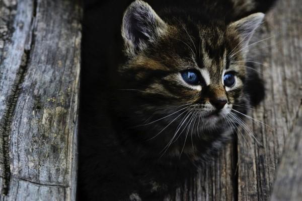 cat-914110_960_720